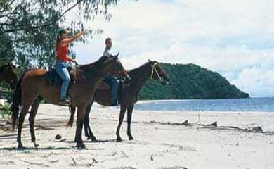 horse riding the beach at Cape Tribulation