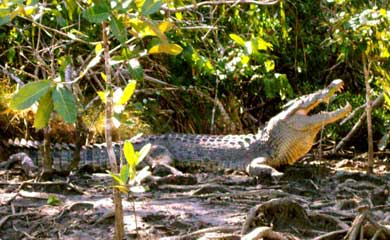 crocodile tour on the Daintree river