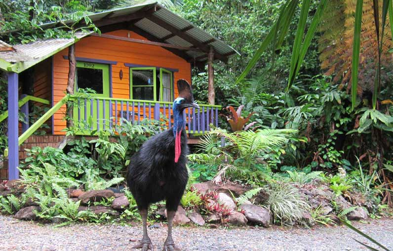 daintree bed and breakfast