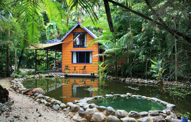 accommodation in the daintree rain forest