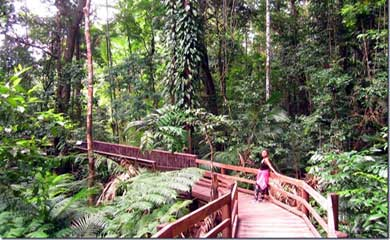 The Daintree Rainforest & Daintree National Park in Cape Tribulation