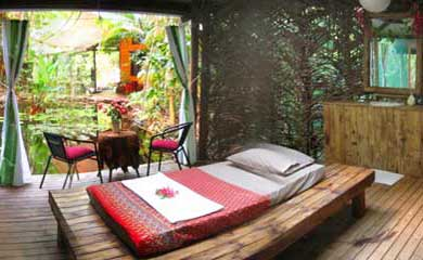 Thai massage in the rain forest at Cape Tribulation