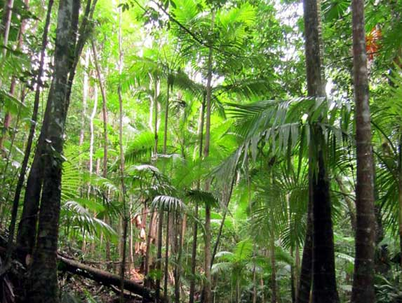 The Daintree rain forest