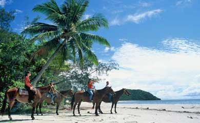 horse riding tours  in the Daintree