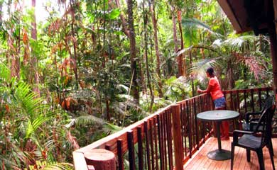 Amazing Cape Tribulation accommodation in the Daintree rain forest